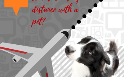 Traveling? 5 Tips For Preparing Your Pets For Their Pet Sitter!