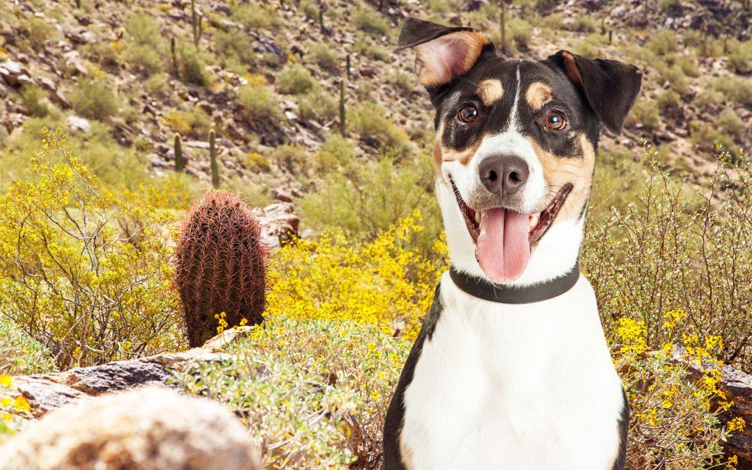 Best Dog-Friendly Hiking Trails Near Phoenix, Arizona
