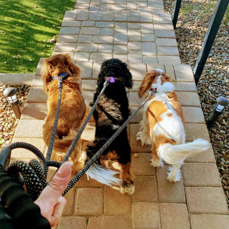 dog walking - Pawfect Pet Sitter