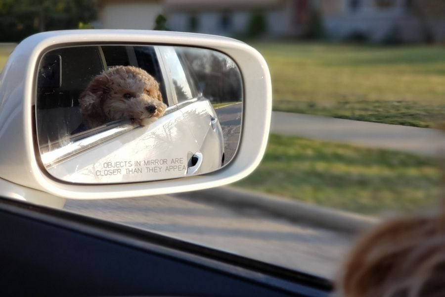 to Travel Safely This Holiday Season (Pet Edition)