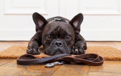 What is the average cost of a dog walk in Anthem, Arizona?
