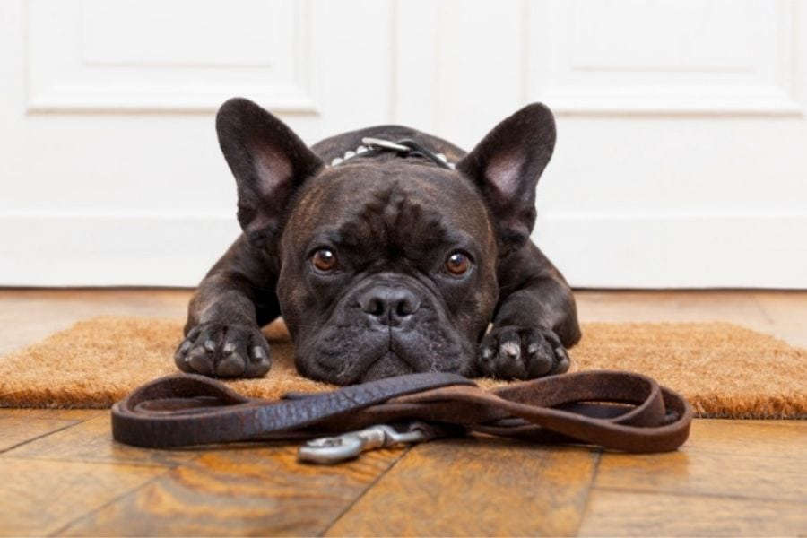 is the average cost of a dog walk in Anthem, Arizona