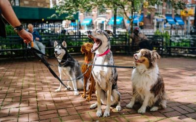 Benefits of Booking a Dog Walking Service in Scottsdale, AZ